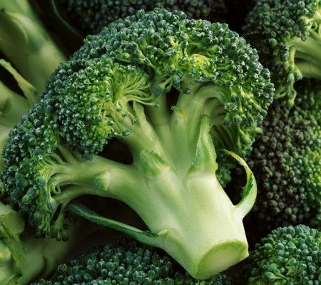 broccoli mdclb