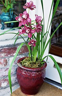 Festive Red Cymbidium 2